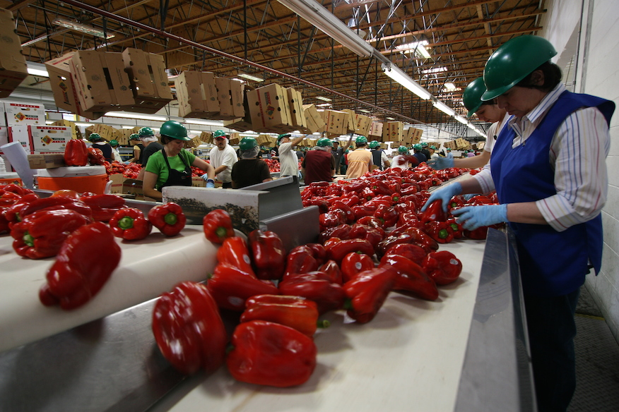Prime Time Shifting Pepper Production to West Coast