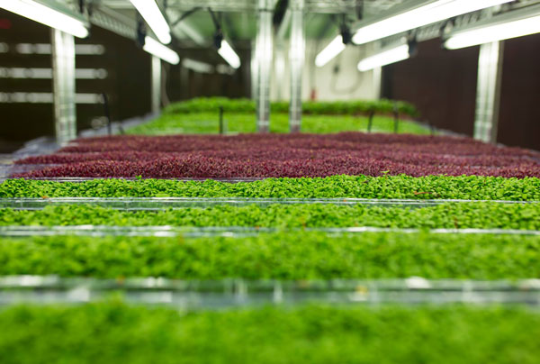 Urban Produce Opens Its First High Density Vertical Growing System